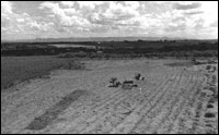 Backfilled midden test trench is oblong darker unit in lower left of photo. Area 2 excavations in upper right. (BW-YJ-JC-009)